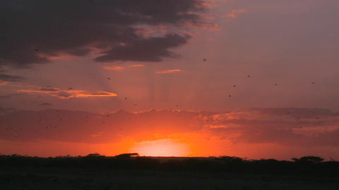 A dusk scene on the plains of Africa Stock Video Footage