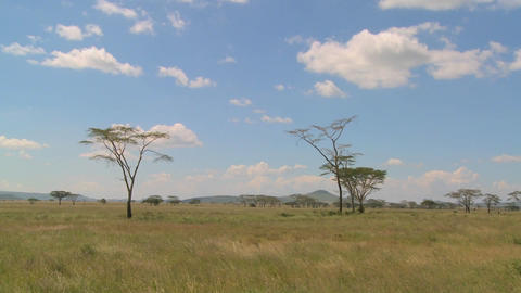 Clouds linger over the Serenegti plain in Africa Footage