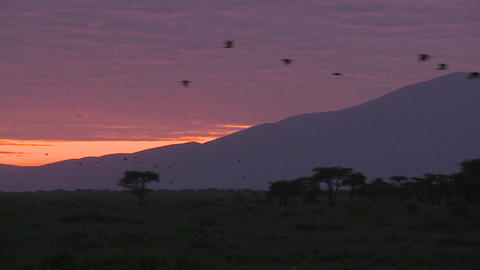 Birds migrate across the plains of Africa at dawn with volcanos in the background Footage