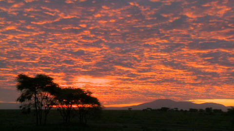 A gorgeous orange sunset over the plains of Africa with acacia trees in foreground Footage