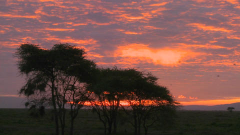An orange sunset over the plains of Africa with acacia... Stock Video Footage