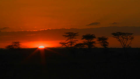 A beautiful sunrise over the plains of Africa, with acacia trees in the distance Footage