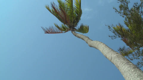 A low angle view looking straight up at a palm tree... Stock Video Footage