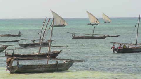 Dhow sailboats head out to fish off the coast of Zanzibar Stock Video Footage