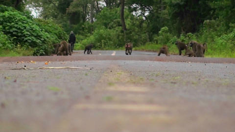 Baboons play on a road in Africa Footage