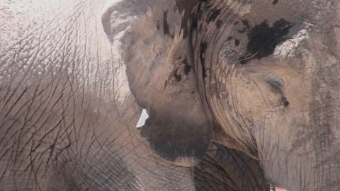An extreme close up of an elephant asleep Stock Video Footage
