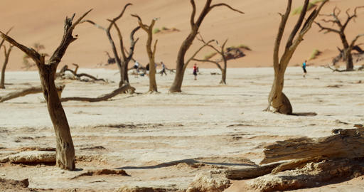 Small bird is flying down on the ground from a dead tree, tourists, Namibia, 4k Live Action