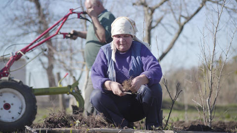 Portrait of old Caucasian woman cutting off vegetable roots outdoors. Man Live Action