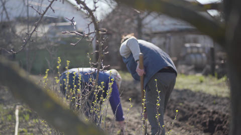 Shooting behind spring tree branches of two women working in rural garden in Live Action