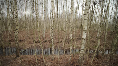 A small river in autumn forest on a cloudy day Live Action