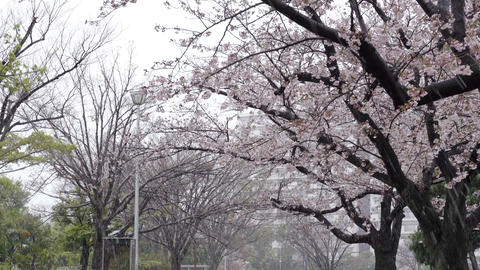 Walking under a cherry tree on a snowy day GIF