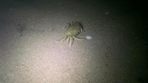 Night Seabed Footage