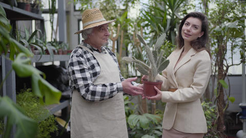 Cheerful old Caucasian gardener giving pot with cactus to positive brunette Live Action