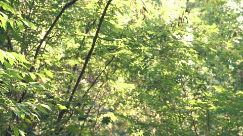 The Girl Jogging In The Forest GIF