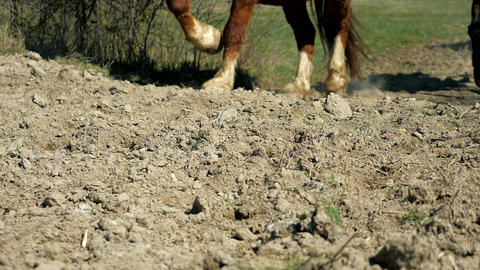 Hoofs of horses running on the sand. Close up of legs of stallions herd galloping on the dry muddy Live Action