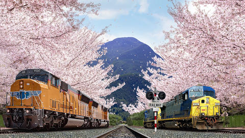 Cherry blossom train Animation