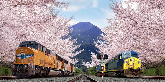 Cherry blossom train arrives Animation