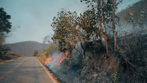 Burning crop on countryside . Farm and ecosystems crisis. Toxic haze from dry Live Action