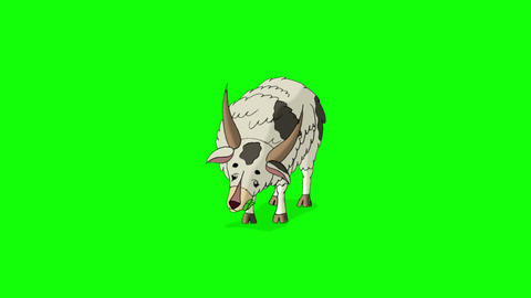 White Domestic Goat Isolated on Green Screen Footage