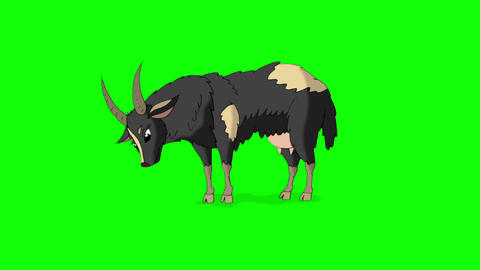 Gray Domestic Goat Isolated on Green Screen Stock Video Footage