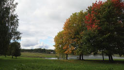 Autumn landscape with trees and leaves Footage
