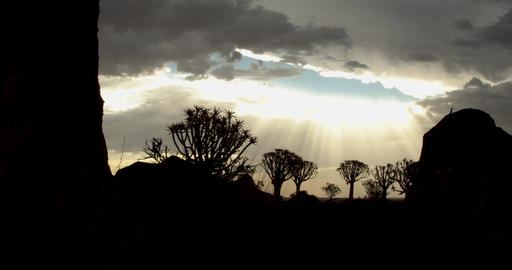 Stunning sun rays are bursting through the clouds, quiver tree forest, 4k Live Action