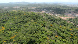 Aerial view of tropical rainforest on the shore of Gatun Lake along the Panama C Footage