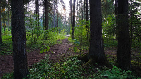sunset in summer forest, timelapse 4k Footage