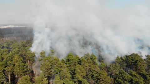A large area of forest is burning. Aerial Large-scale forest fire. Fire in the Live Action