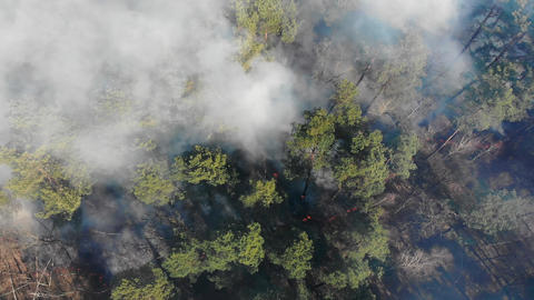 Aerial view from the top of the forest that is burning. A large area of forest Live Action