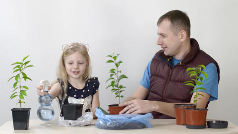 Father and daughter transplanted indoor plant Mandarin Little girl puts earth in Live Action