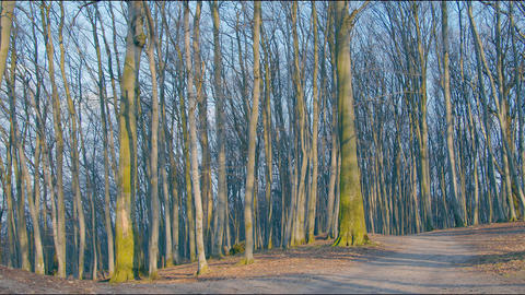Mysterious spring forest on a sunny day. Panorama of the enchanted enchanted Live Action