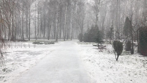 Snow Snowstorm in the Park Live Action