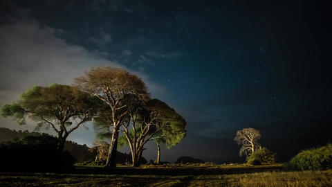 Dry tree at night against the background of the night sky and moving clouds Live Action