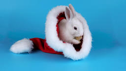 Funny bunny washing his face in the Santa Claus hat, on blue chroma key Footage