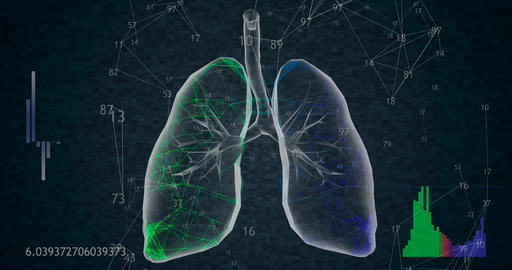 Rotating 360 low polygonal lungs 3D model on black background with animated Animation