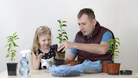 Happy emotions of father and child. Father and daughter transplanted indoor Live Action