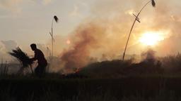 Balinese Farmer Is Burning Stubble In Rice Field 2