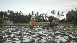 Ubud Bali Farmer Plowing