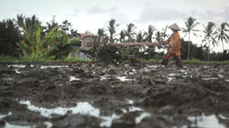 Balinese farmer using old wheel plow in the field prepared for rice plantation n Footage