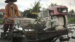 Ubud Bali Farmer Plowing 1