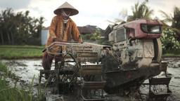 Ubud Bali Farmer Plowing 2