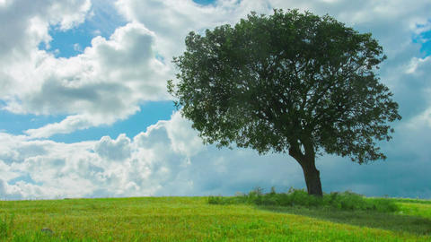 Time-lapse of green tree growing in field under cloudy sky. Weather forecast Footage