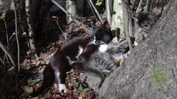cat with a kitten Stock Video Footage