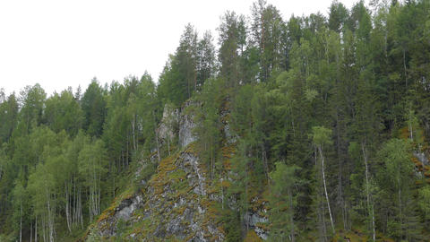 Pines on the rocks, the river Serga, Urals, Russia Footage