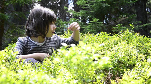 Young girl sits in a bush blueberries are eaten ripe and juicy fruit 01 Footage