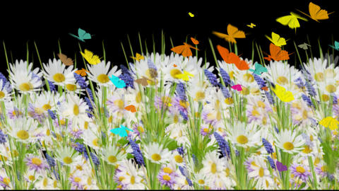 4k WILDFLOWERS FIELD Animation
