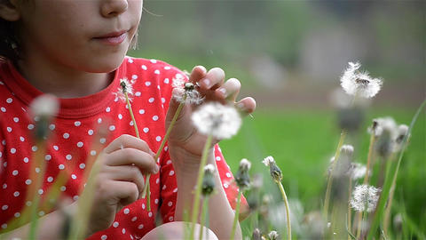 Young girl with red blouse blowing dandelion flowers to make them fly seeds Footage