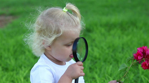 Close-up of a child exploring the red flower through a magnifying glass Footage