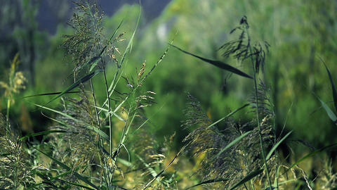 Plants dancing with the wind Footage